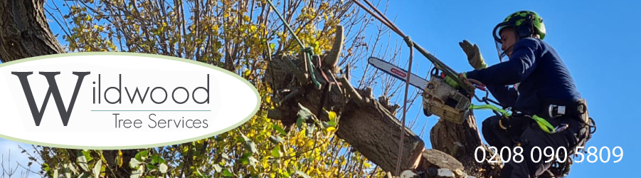 Wildwood Tree Services | Tree surgeons Brentford