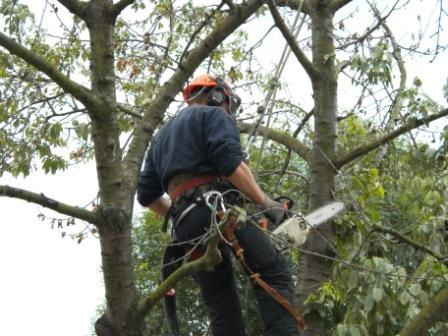 Wildwood Tree Services | London Tree Surgeons