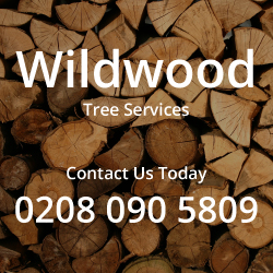 Wildwood Tree Services Tree Surgeons Brentford